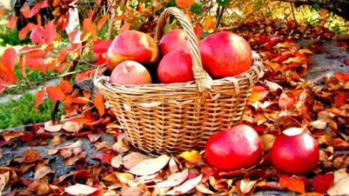 к чему снятся яблоки срывать
