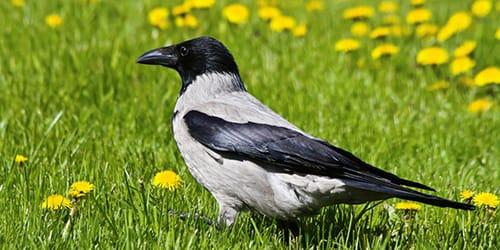 Снятся Птицы К Чему Это