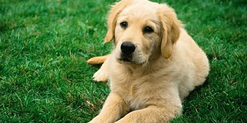 Сонник собака мокрая фото