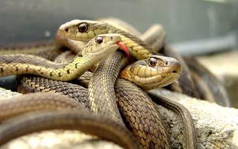 во сне змея и яд