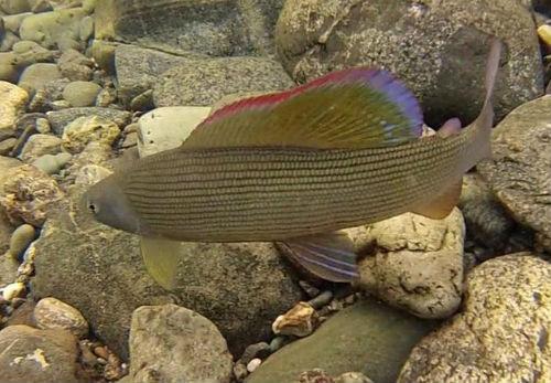 к аквариуме рыбы чему снится в мужчине