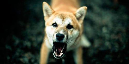 Фото Сонник собака лает и бросается