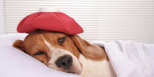 Фото Сонник сбила собаку во сне