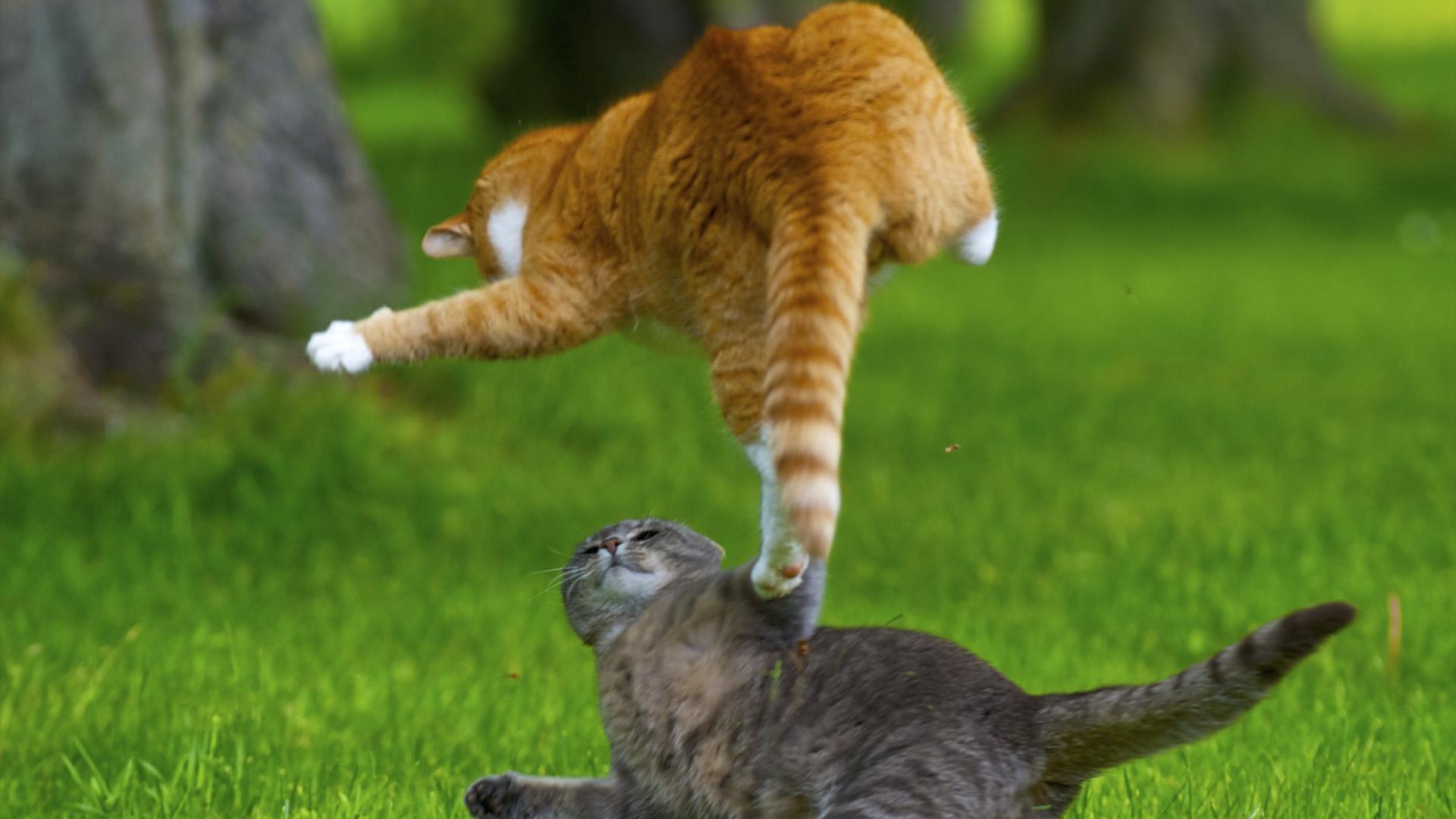 Выгонять котов из дома во сне к чему