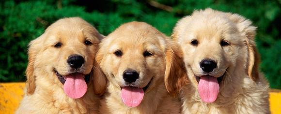 Сонник собака в клещах фото