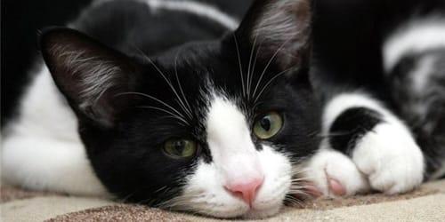Выгнать Кошку Сонник