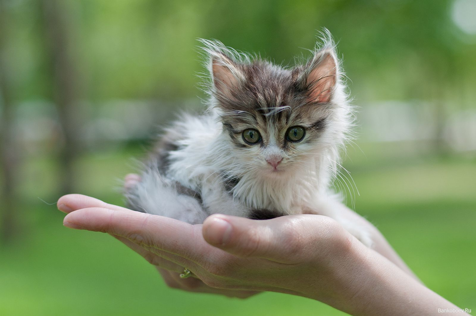 Сонник стать котом в