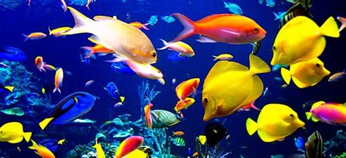 снятся если рыбки маленькие