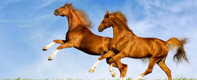 Сонник лошадь в цирке