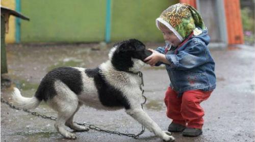 Фото Сонник выставка собак