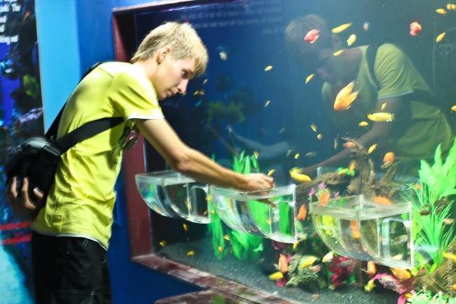 рыбы в аквариуме сонник миллера