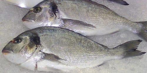 К рыба снится чему кусочки