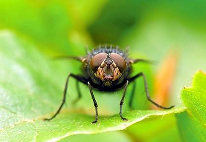 и осы мухи сонник