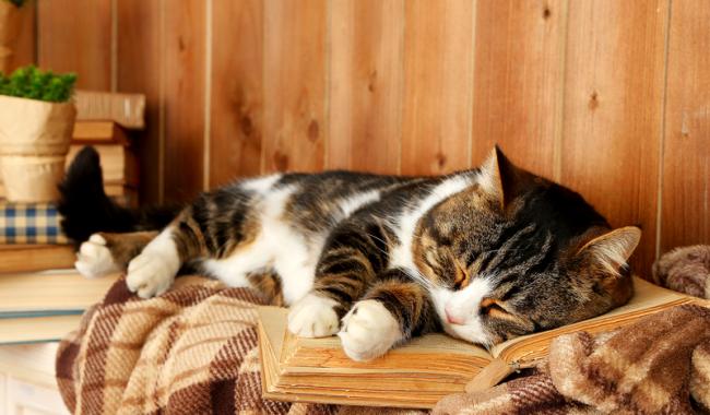 Превратился в кота во сне