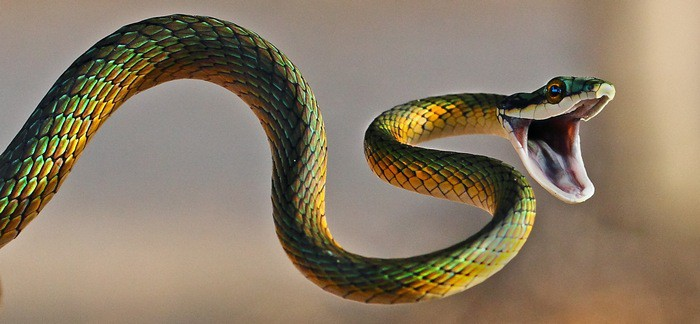 змей на много сонник полу