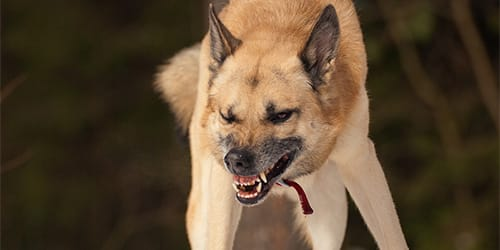 Сонник злые своры собак нападают и преследуют фото